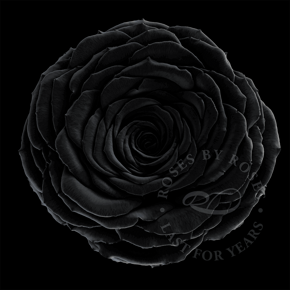 Black Rose last for years, luxurious long-lasting black roses