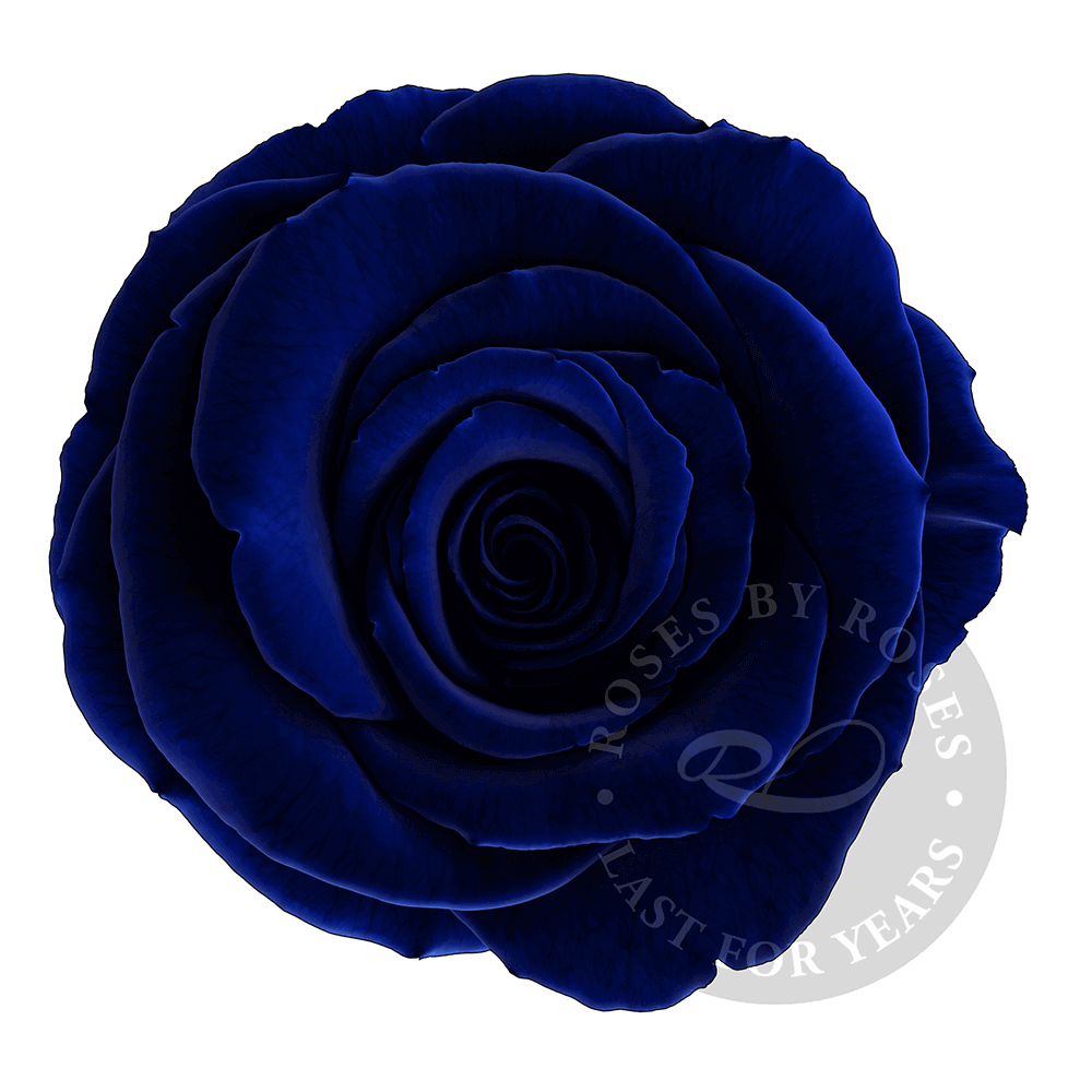 Blue Dark Rose preserved, long-lasting exclusive rose