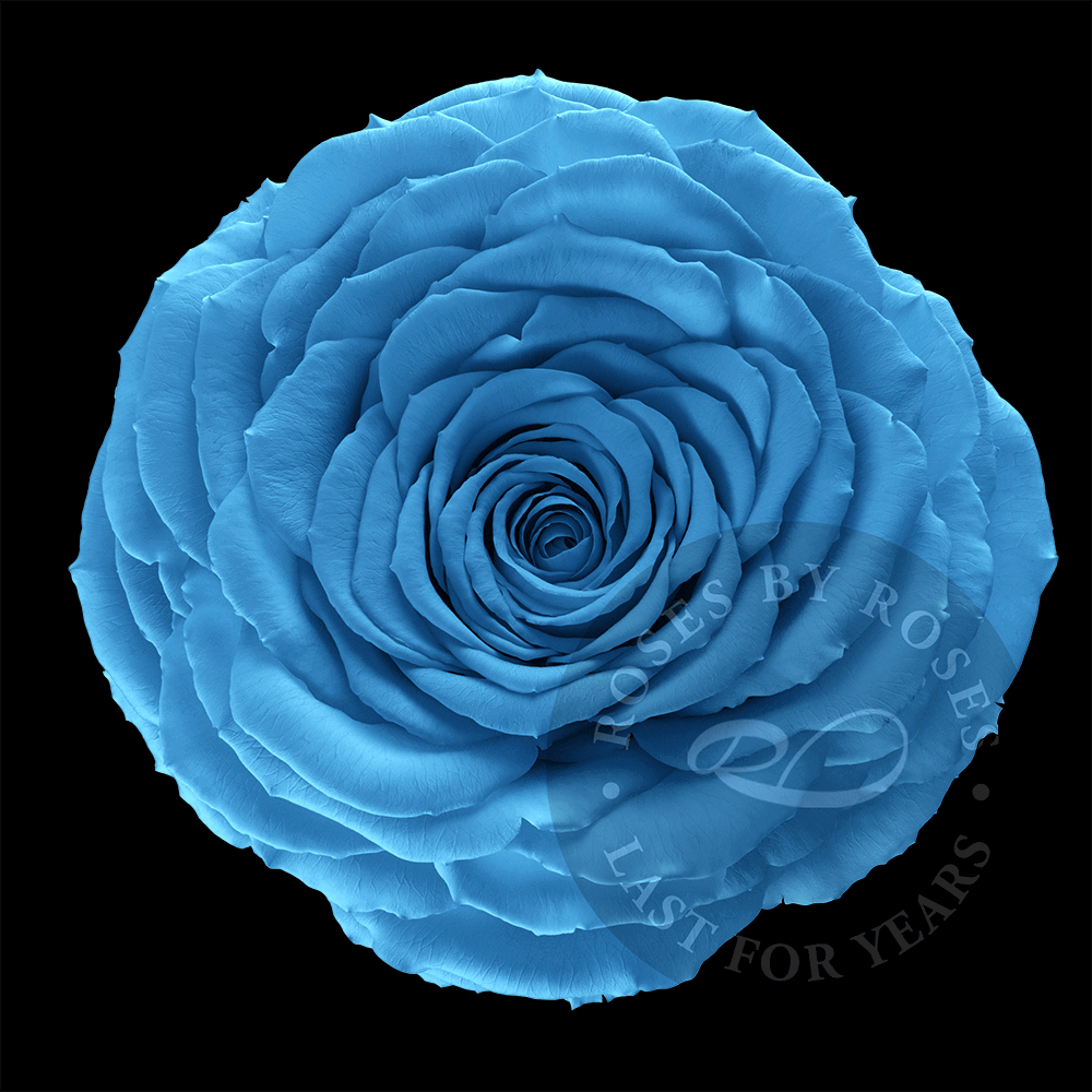 blue Rose last for years, luxurious long-lasting baby blue roses