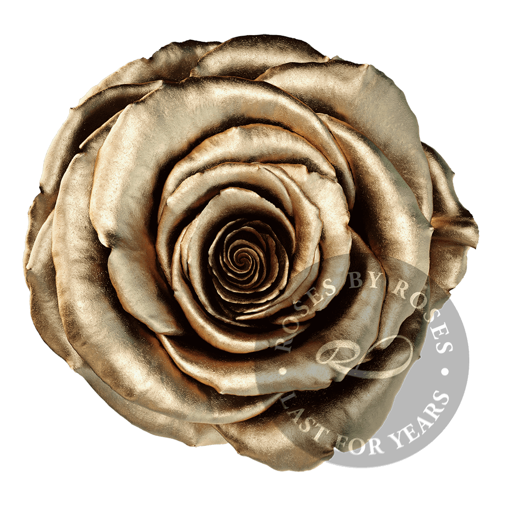 Gold Rose preserved, long-lasting exclusive golden roses