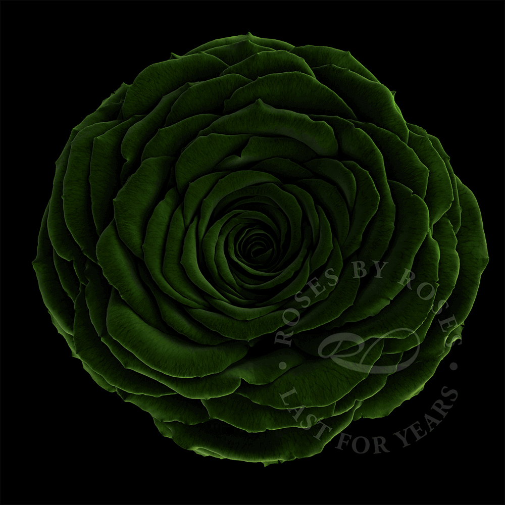 Dark Green Rose last for years, luxurious long-lasting dark green roses