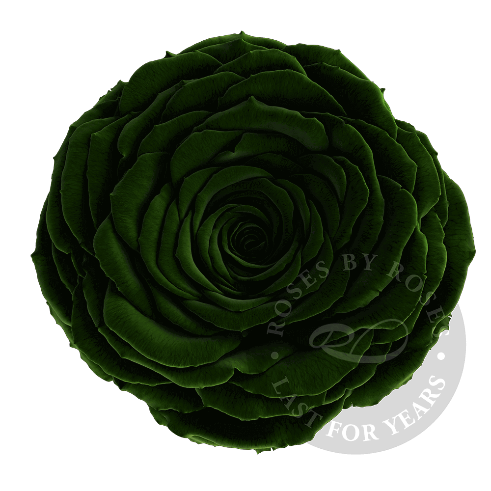 Preserved Dark Green Rose, Premium long-lasting XL dark green roses