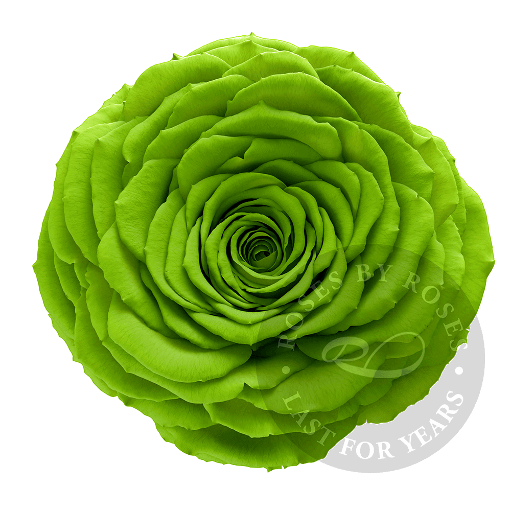 Preserved green Rose, Premium long-lasting XL grass green roses