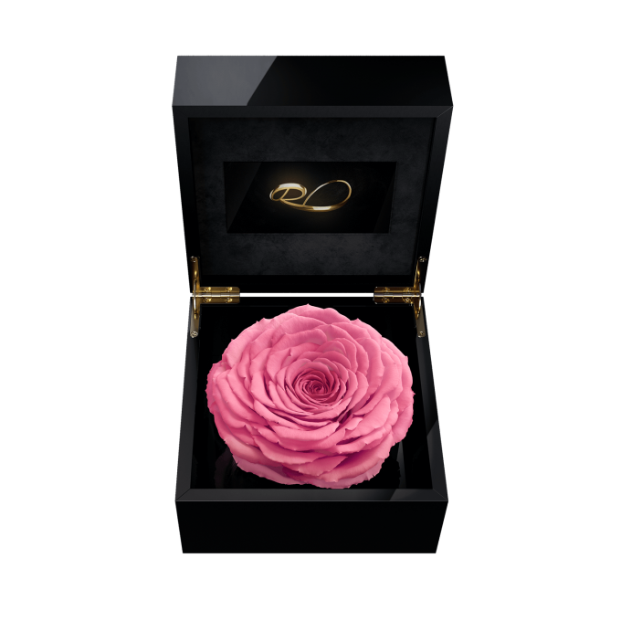 Luxury video flower box Magna with a XL Preserved Pink Rose