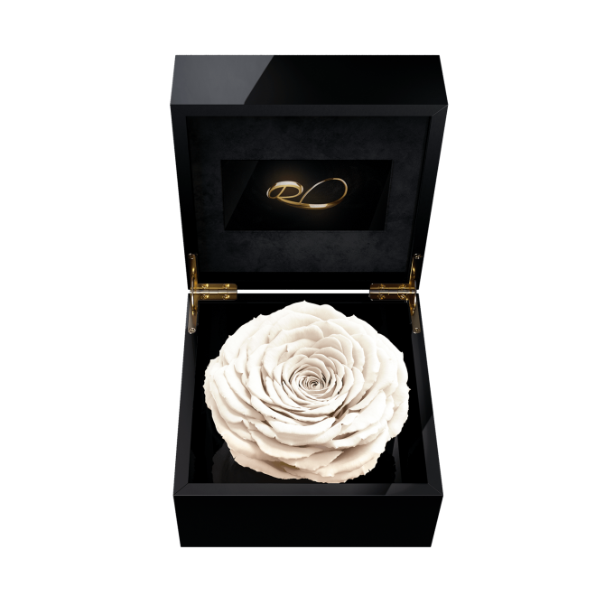 Luxury video flower box Magna with a XL Preserved White Rose