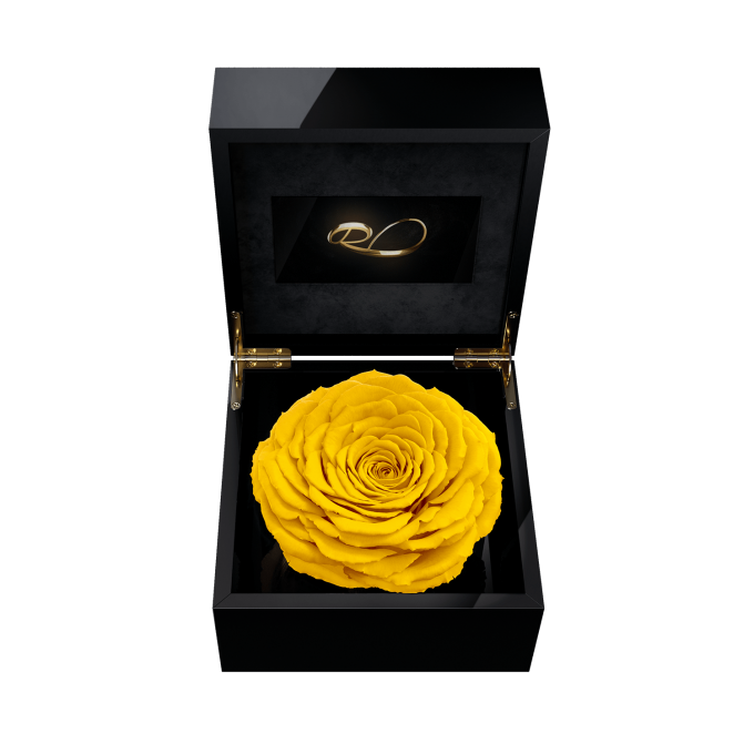 Luxury video flower box Magna with a XL Preserved Yellow Rose