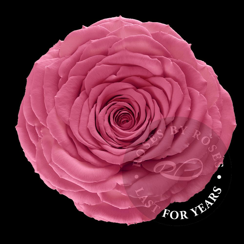 Preserved Pink Rose, Premium long-lasting XL pink roses