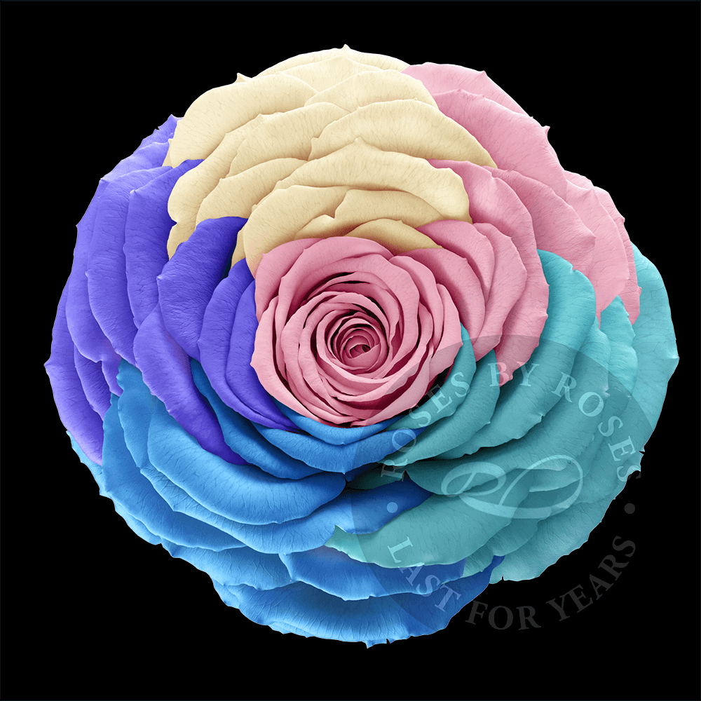 Rainbow Rose last for years, luxurious long-lasting rainbow roses