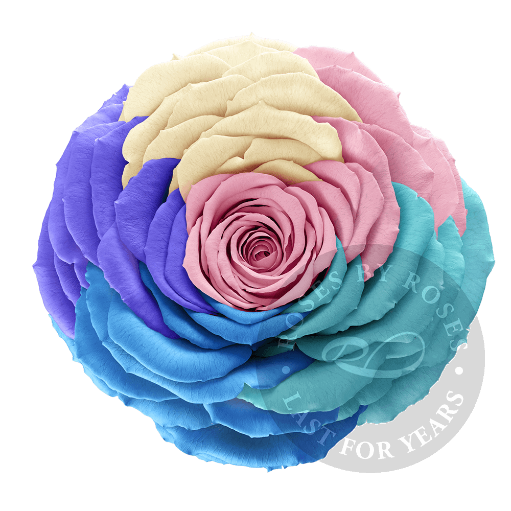 Preserved Rainbow Rose, Premium long-lasting XL rainbow roses
