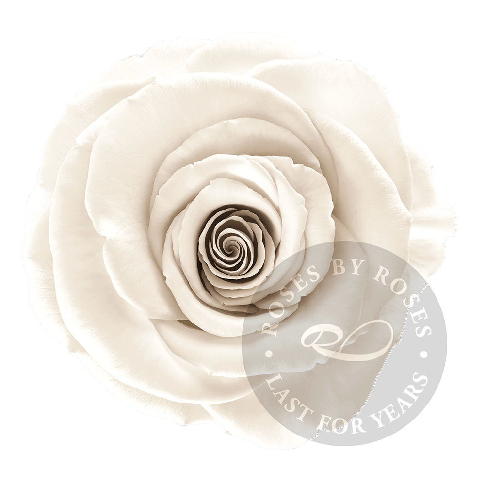 White Rose preserved, exclusive long-lasting white roses
