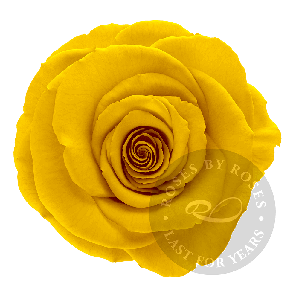 Yellow Rose preserved, exclusive long-lasting yellow roses