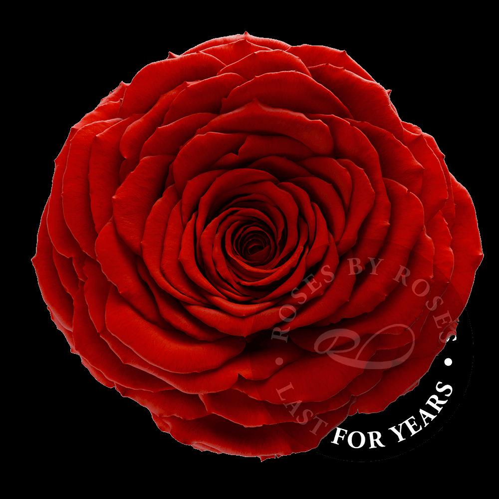 Red-rose-preserved-big-rosesbyroses
